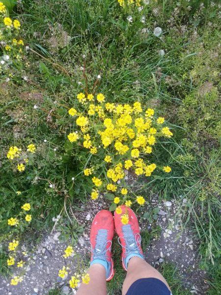 Blumen am Wanderweg